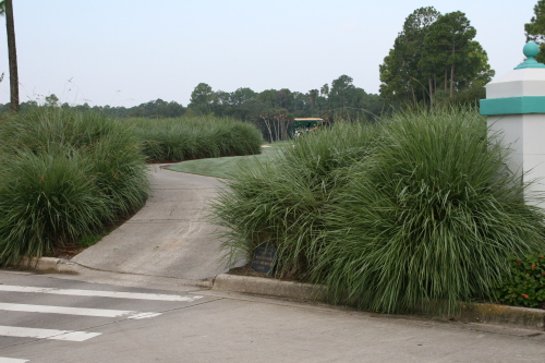 Ornamental Grasses Florida Ornamental grasses workwithnaturefo